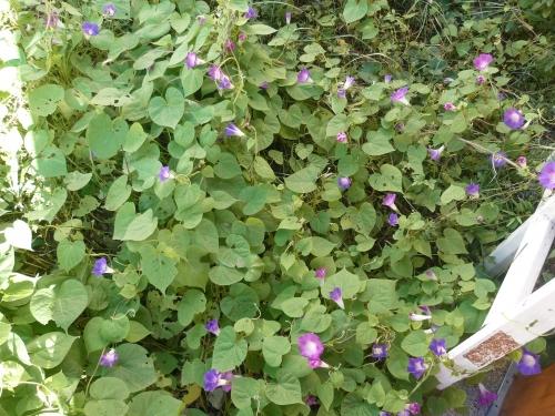 jardin,plantes,fleurs,jardinage,hiver,cactus,plantes fragiles,intérieur