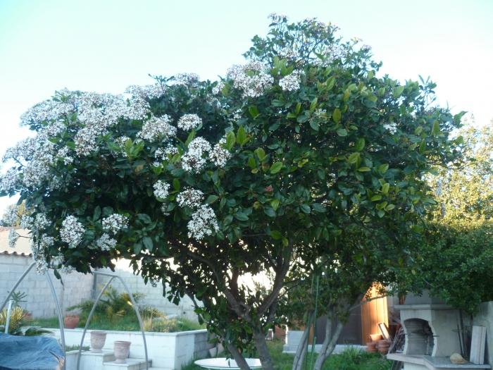 jardin,plantes,fleurs,printemps,saison