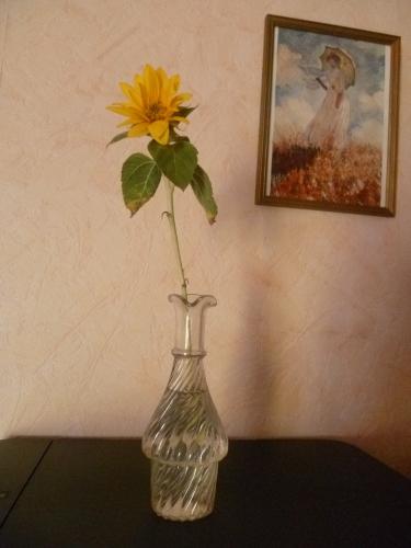 jardin,jardinage,plantes,fleurs,été,tournesol