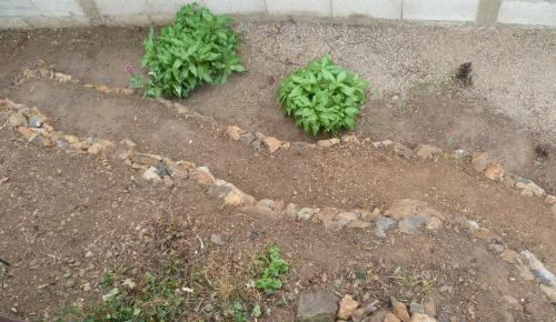 jardin,maison,travaux,aménagement,décoration de jardin