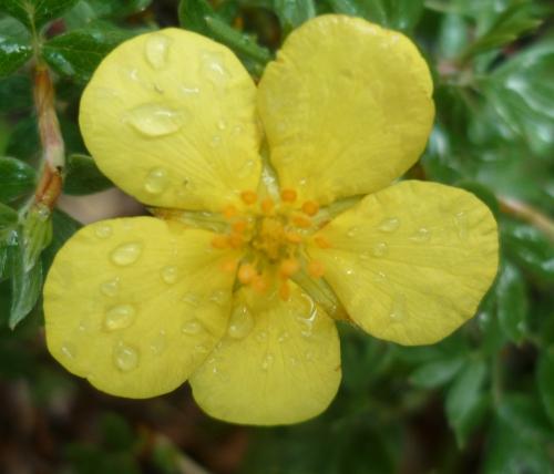 citations,saison,fleurs,soleil,été,pluie