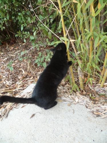 chat,soir,jardin,terrasse,maison,nuit,poésie,poème,poète