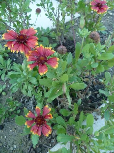 saisons,écriture,jardin,fleurs,jardinage,campagne