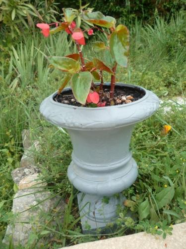 jardin,culture,main verte,saison,été,fleurs,août