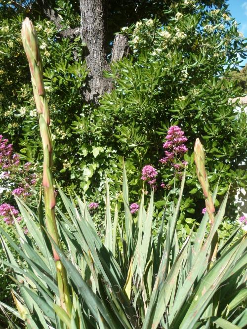 jardin,printemps,fleurs,loisirs,jardinage,saisons