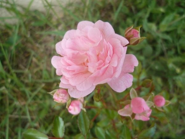 fleurs,plantes,jardin,jardinage paysage,couleurs,loisiirs