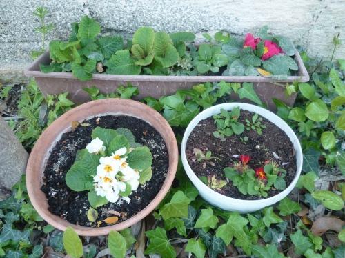 jardin,jardinage,fleurs,plantes,pots,printemps,loisirs