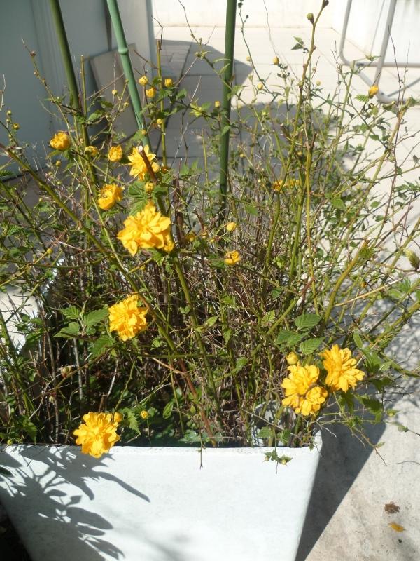 fleurs,jardin,jardinage,promenade,cour,plantes,loisirs,mars,soleil