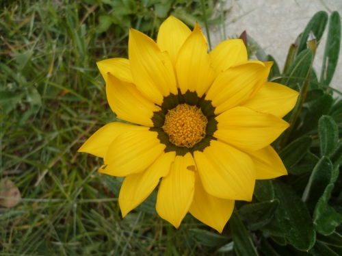 jardin,fleurs,jardinage,loisirs,plantations,campagne,village