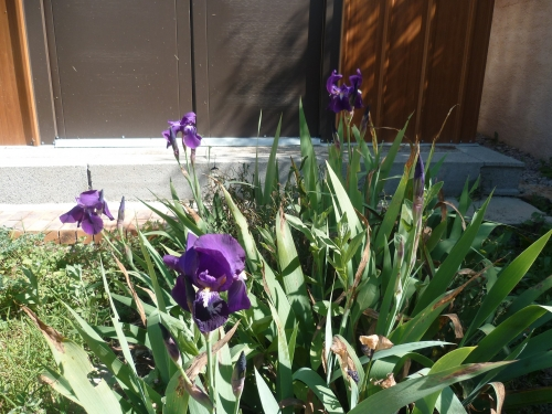 jardin,jardinage,plantes,fleurs,printemps,saisons,loisirs,nature
