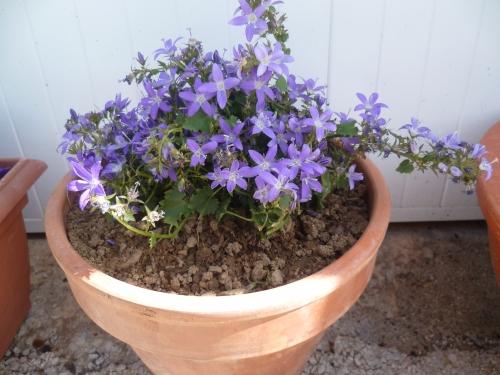 fleurs,nature,printemps,saison,jardin,culture