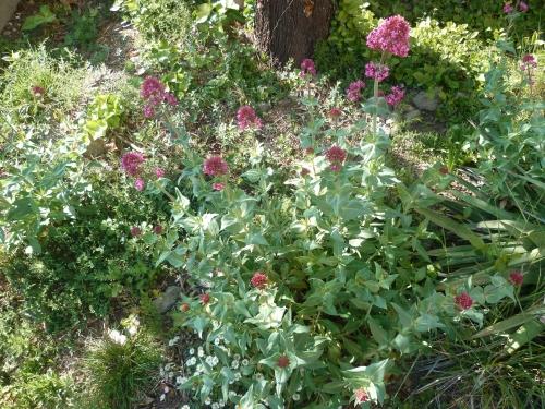 jardin, fleurs, avril, printemps, loisirs, jardinage, plantes