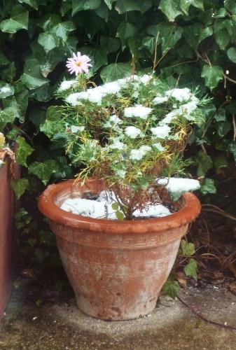 neige,froid,verglas,glace,hiver,photos hiver,maison,jardin,fleurs