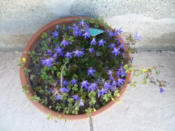 Fleurs, plantes, menthe, jardin, jardinage, gazon, tonte, loisirs
