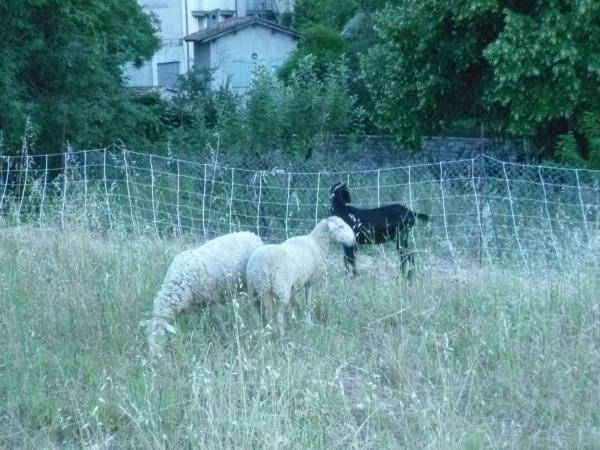 campagne, vie à la campagne, été, loisirs, moutons, chèvres, animaujx