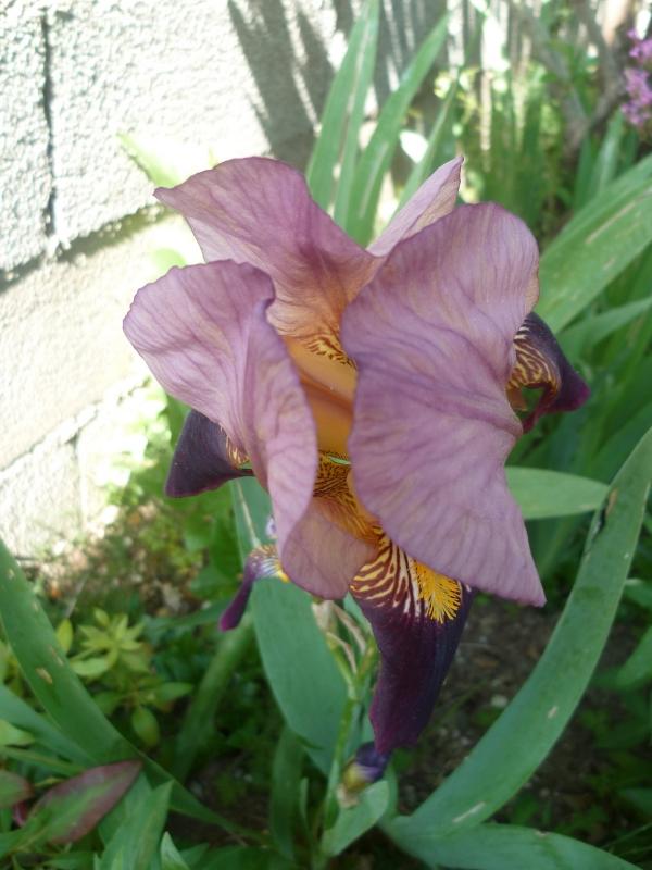 fleurs,plantes,jardin,jardinage,insectes,nature,iris,fraises,yucca