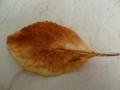 nature,saisons,automne,poésie,poèmes