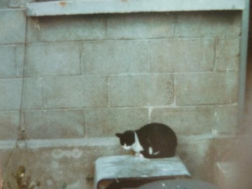 chats,animaux domestiques,animaux,souvenirs,enfance
