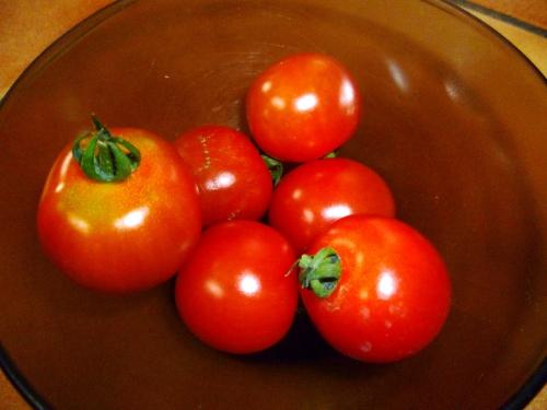 jardin,saison,été,tomates,récolte,potager