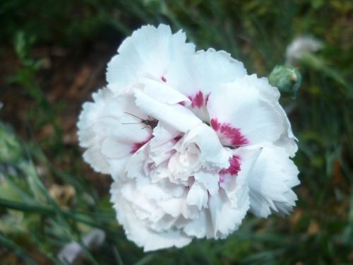 fleur,saison,nature,jardin,écriture,été,faune,insecte,photo