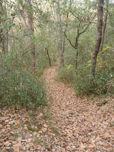 promenade,randonnée,balade,marche,sport,murviel les montpellier,loisirs