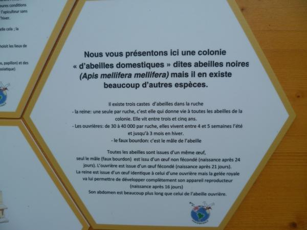 abeilles,animaux,expérience,insectes,nature