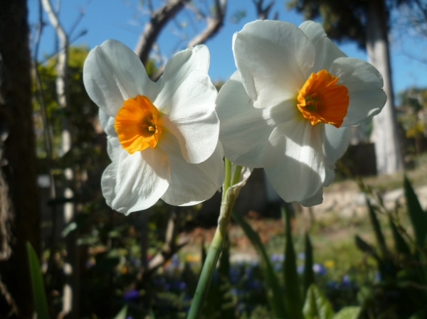 jardin,jardinage,paysage,fleurs,plantes,printemps,loisirs,nature