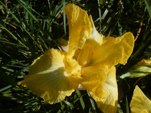 saison,jardin,printemps,loisirs,soleil,journal intime,web