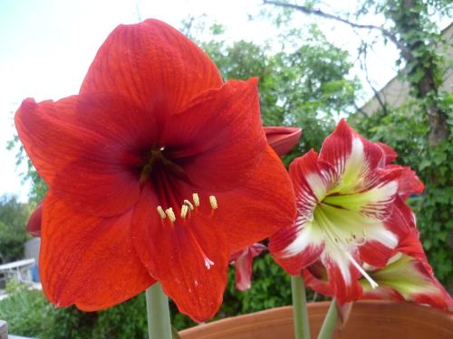 jardin,fleurs,plantes,jardinage,printemps,loisirs,maison